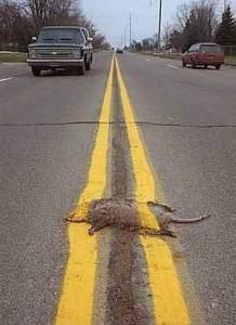 roadkill_funny
